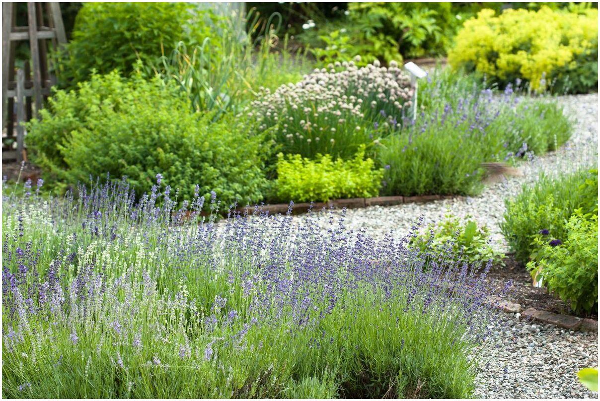 herbes-vivaces-