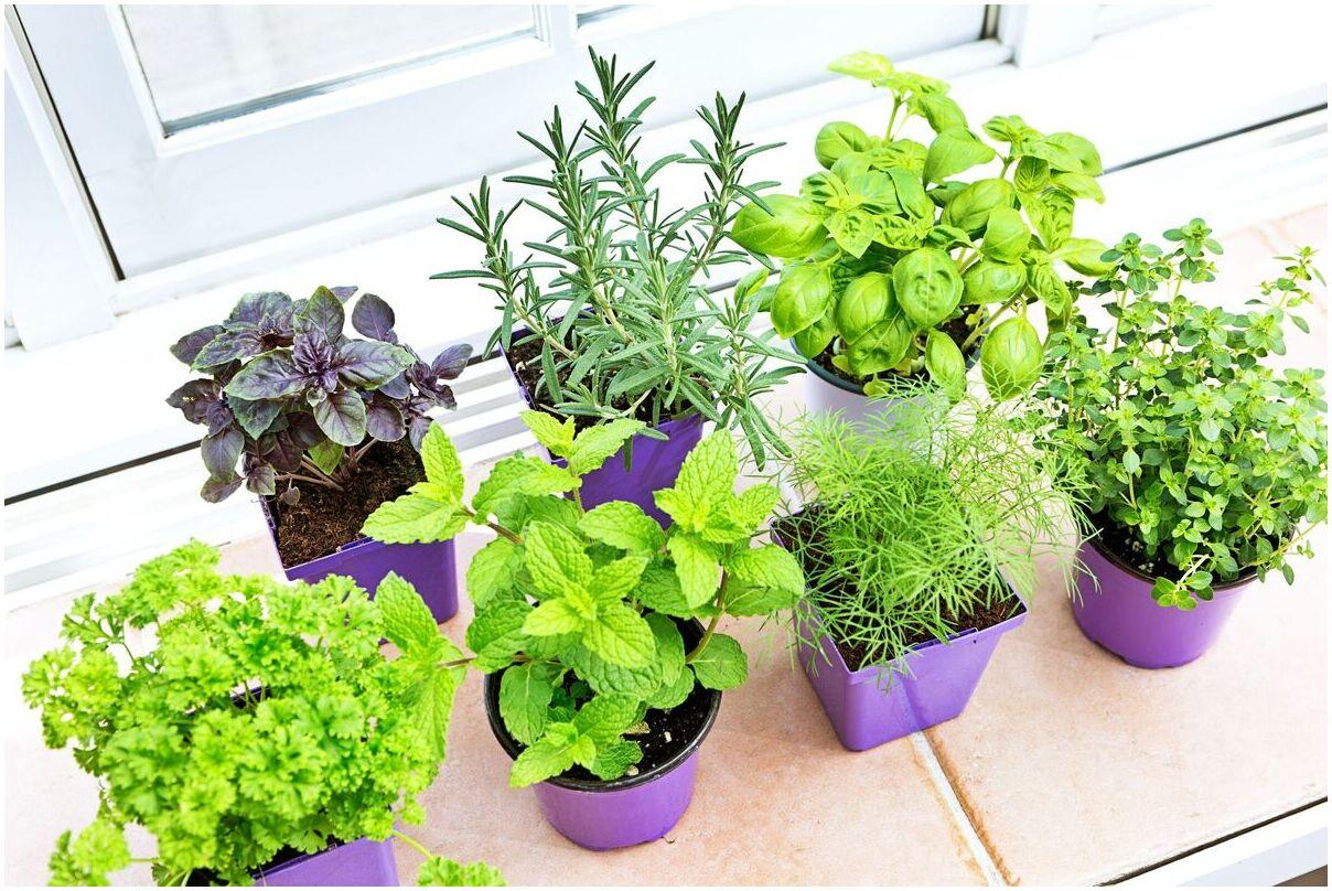 herbes-vivaces